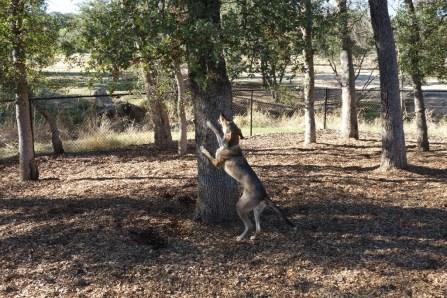 Dog park, chasing squirrels