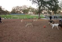 Dog park, socializing