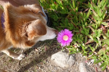 Lola smelling the flowers