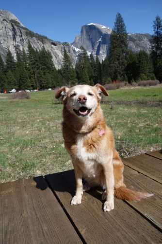 Lola in front of Half Dome