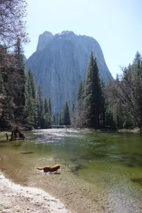 Lola playing in a stream near El Capitan (background)