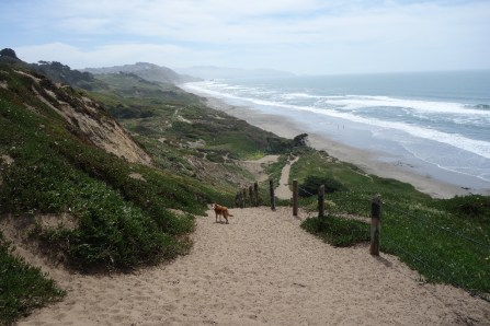Back at Fort Funston with Lola