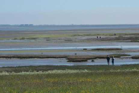 "Low tide on the ""wad"""