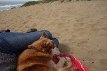 Taking a nap at Fort Funston - waiting for Mark to return from a business trip
