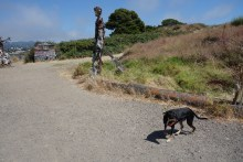Walking our current dogs at the Albany Bulb, where we used to walk with Darwin and Kali