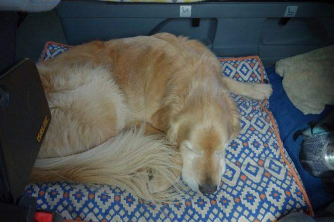Comfy Oscar in the camper