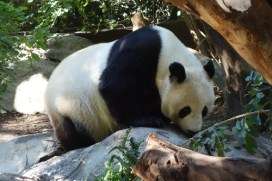 The panda exhibition was very popular with a long cue of visitors