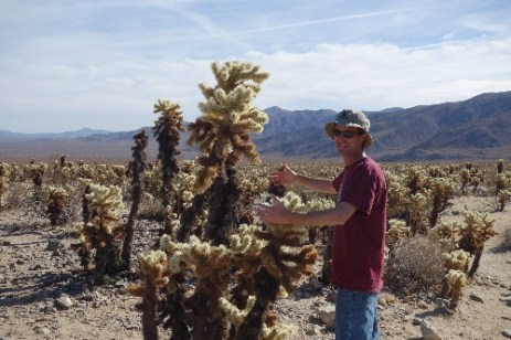 """The Cholla Cactus Garden holds an abundance of these 'cuddly looking"""" cacti"""
