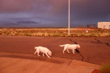 Walking the yellow labs after a storm.