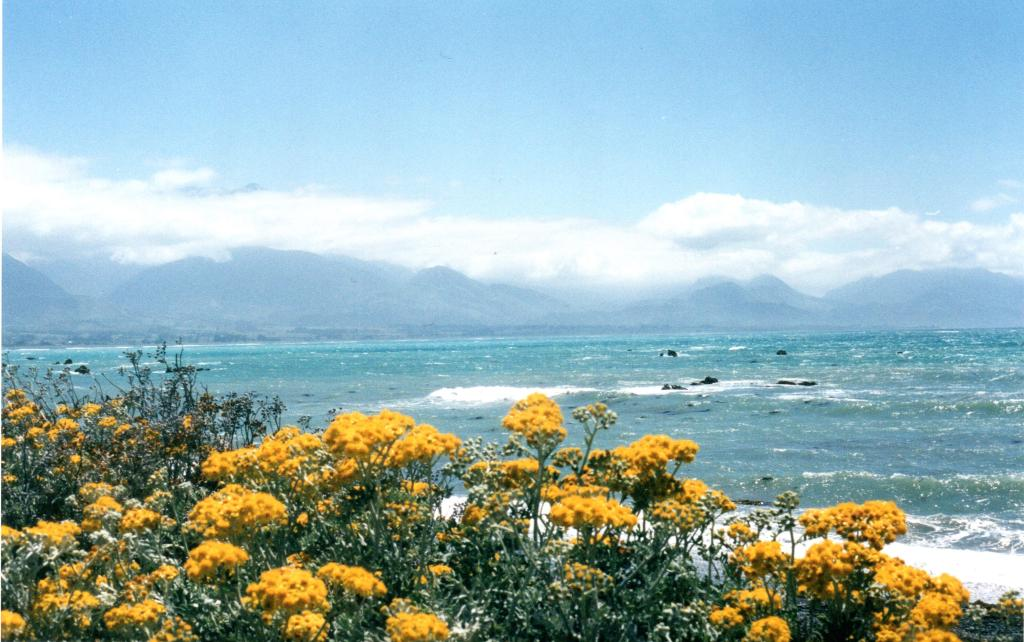 View of the sea and mountains from Kaikoura - Rob Gregory Author