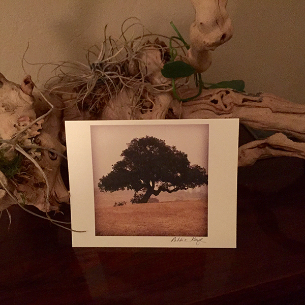 Robbie Kaye Give Away, Snail Mail, Oak Tree, Santa Ynez Valley, California, Santa Barbara County, Photography, Fine Art, Landscape, Country