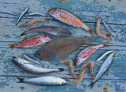 High angle view of still life of a selection of fish, prawns and other seafood from the Mediterranean, on a blue wooden table, Andalucia (Andalusia), Spain, Europe