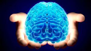 prefrontal cortex