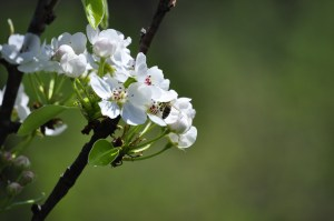 Beautiful_spring_season