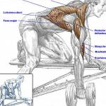 dumbell-row.300x250.24773