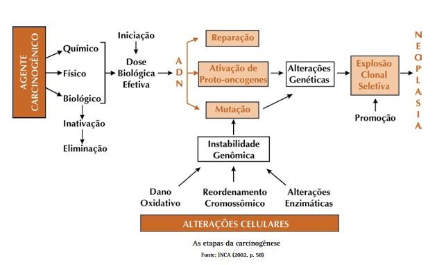 as etapas da carcinogenese