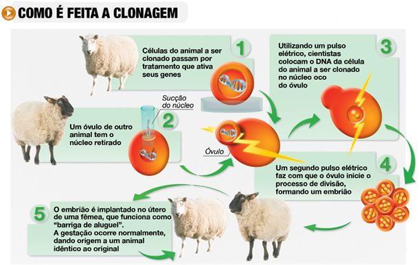 a-clonagem-da-ovelha-dolly-7