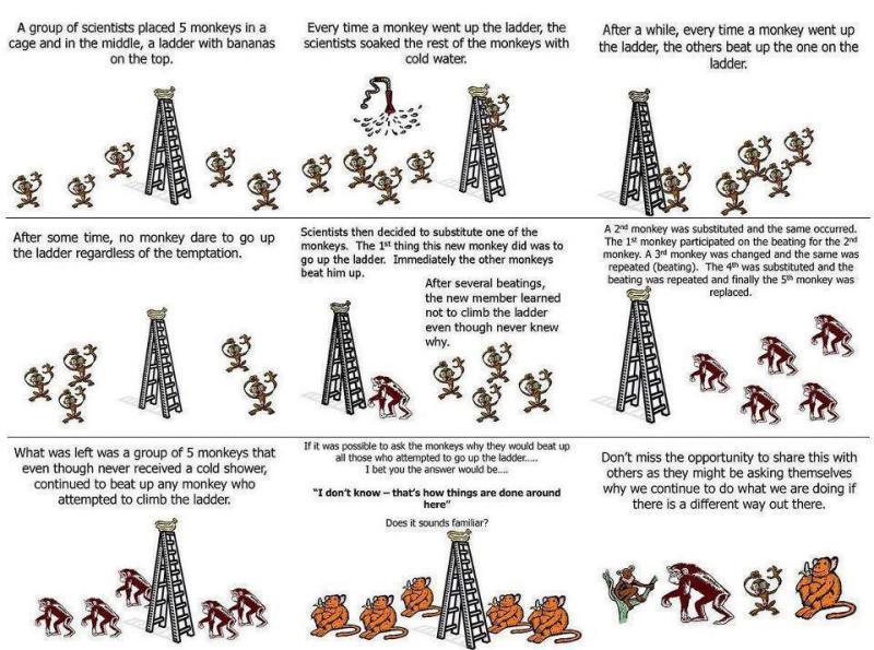Cinque scimmie