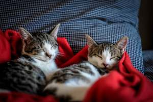 2 Cats sleeping on red blanket