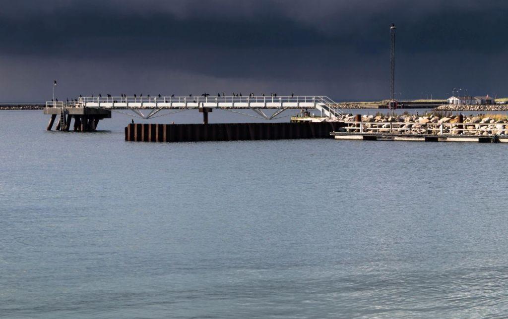 Aalschovers op pier Rodbyhavn