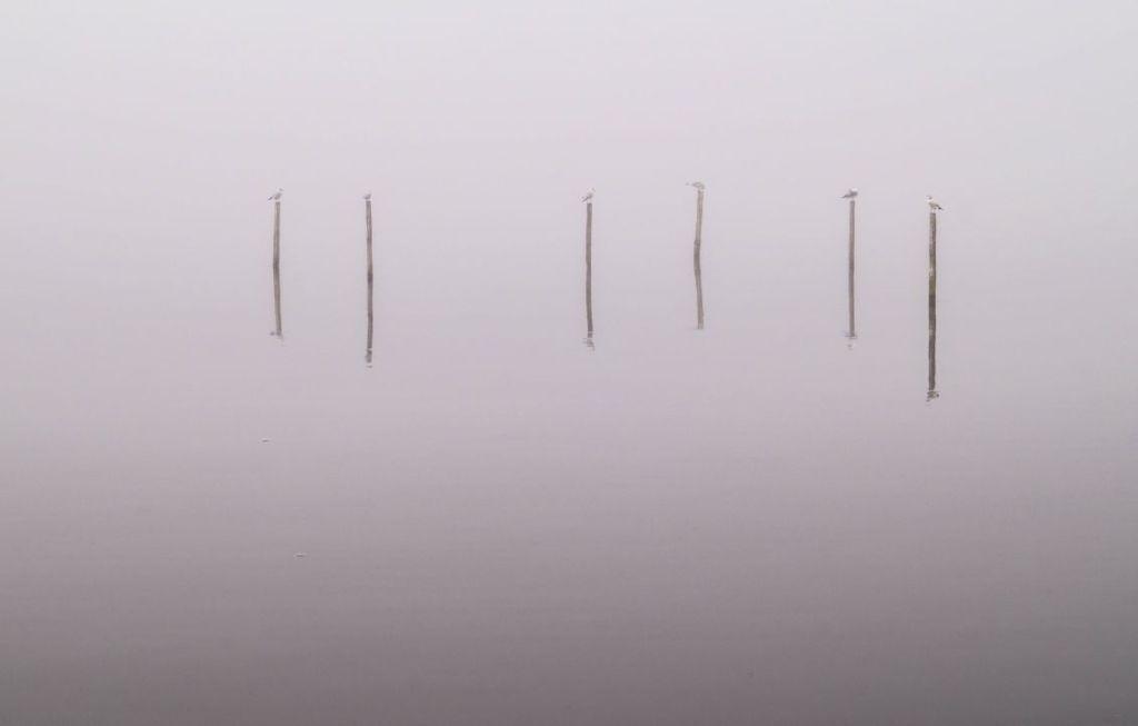 Fuikpalen in de mist, Wolderwijd, Zeewolde