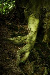 Klauw van een boom