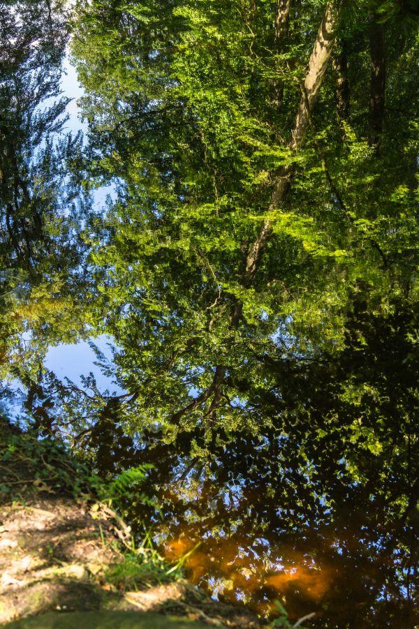 Spiegeling water Staverden