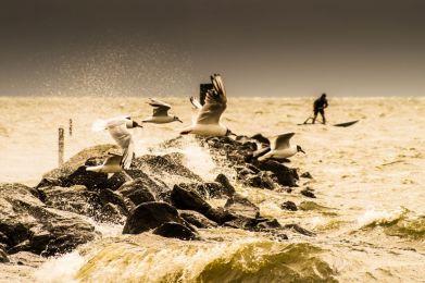 urk, Meeuwen en surfer voor de storm