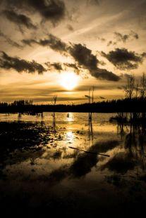 Horsterwold, reflecties in water
