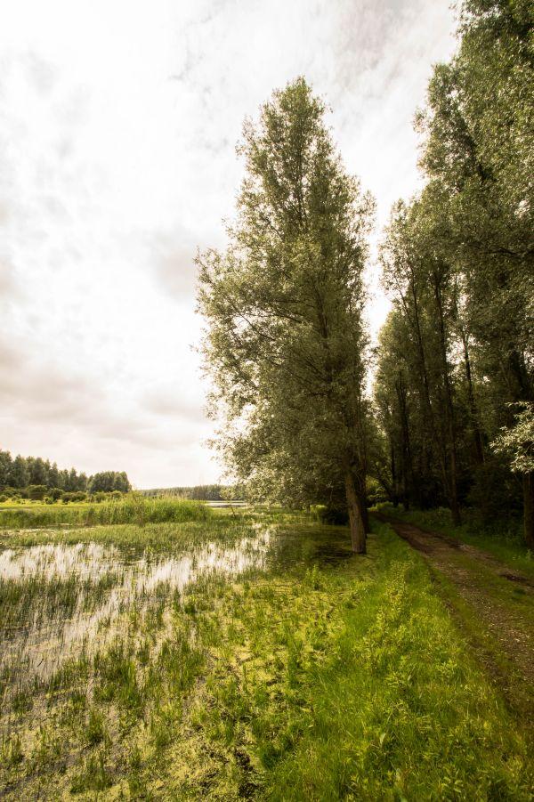 Horsterwold_20160701