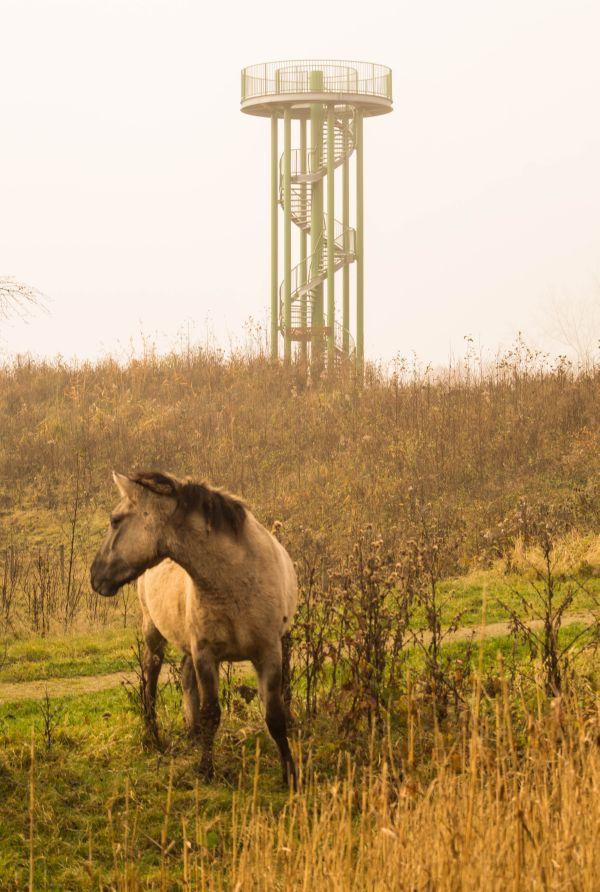 mistig-horsterwold_04