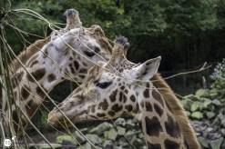 RST_Ouwehands dierenpark Rhenen-oktober 31, 2017-3