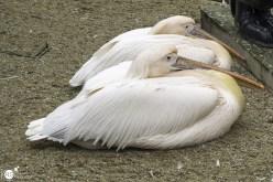 RST_Ouwehands dierenpark Rhenen-oktober 31, 2017-39