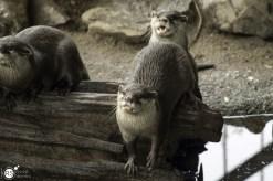 RST_Ouwehands dierenpark Rhenen-oktober 31, 2017-41