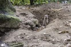 RST_Ouwehands dierenpark Rhenen-oktober 31, 2017-5