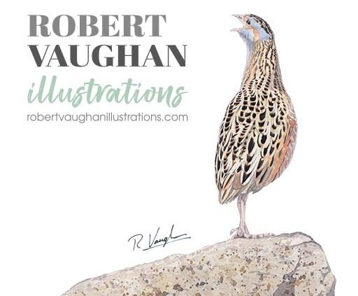 Robert Vaughan Watercolour Wildlife and Birds Art Illustrations.