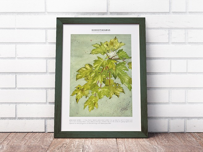 Signed Print Yellow-Browed Warbler