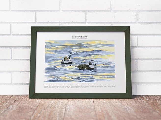 Signed Print Long-tailed Ducks
