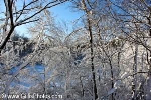 Winter---Foxboro-Trees