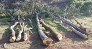 Montesano sulla Marcellana, sanzione per taglio abusivo di bosco