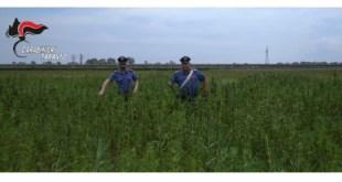Piantagione di droga a Castellaneta, 4 arresti