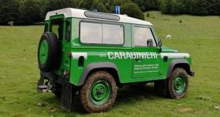 Arma Forestale di Rotonda, il bilancio operativo 2020