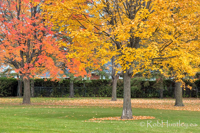 Reds and yellows. Fall colours in Westwood Park.