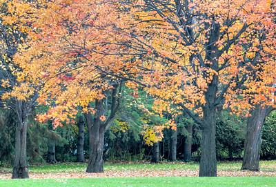 Autumn colour in Westwood Park, Ottawa.
