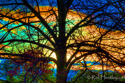 Stained glass effect on a tree silhouette in the arboretum