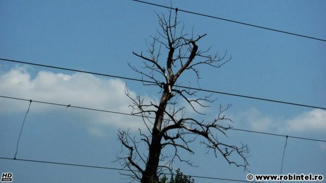Un copac uscat cu o formă precum în filmele de groază