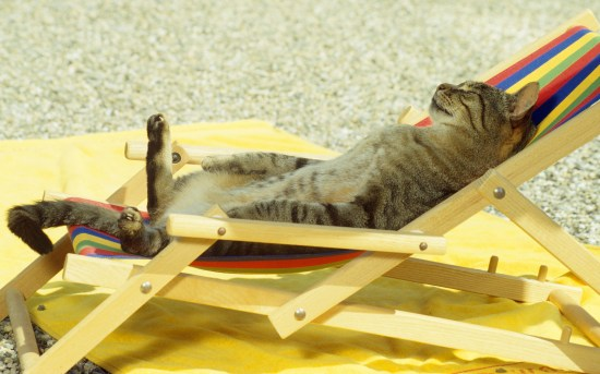 cat-sunbath-chill