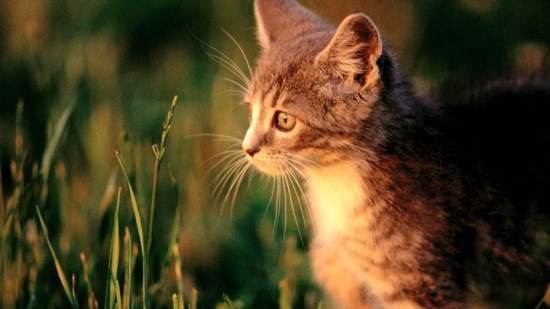 Cat In Field At Sunset Time-720x405