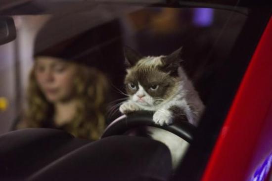 grumpy-cat-christmas-car-600x400