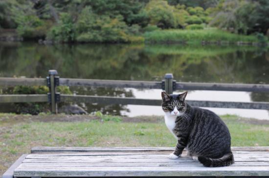 park cat